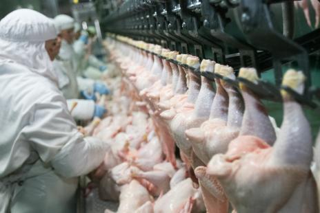Brasil cobra das Filipinas retirada de embargo à carne de frango thumbnail