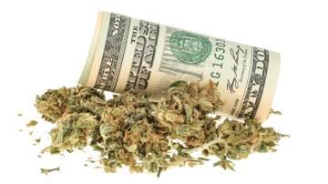 Planta Cannabis com nota de dólar (Shutterstock)