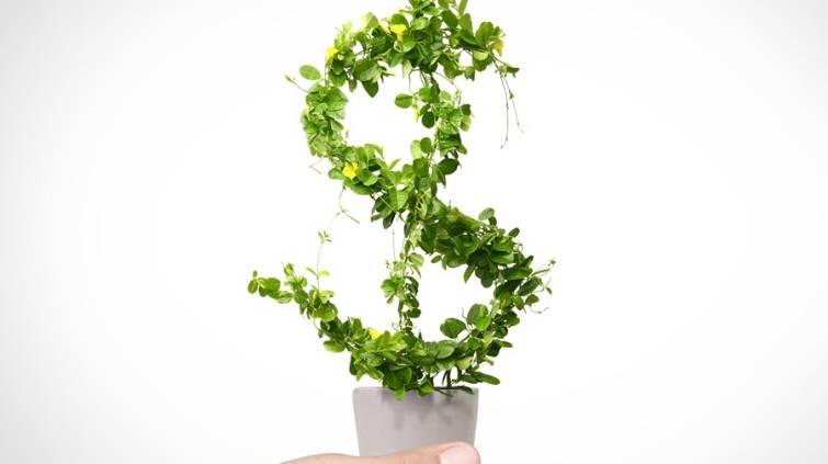 sustentabilidade-planta-de-cifrao
