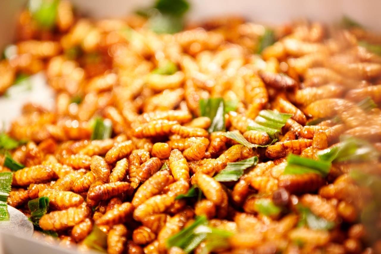 bicho da seda frito comida inseto