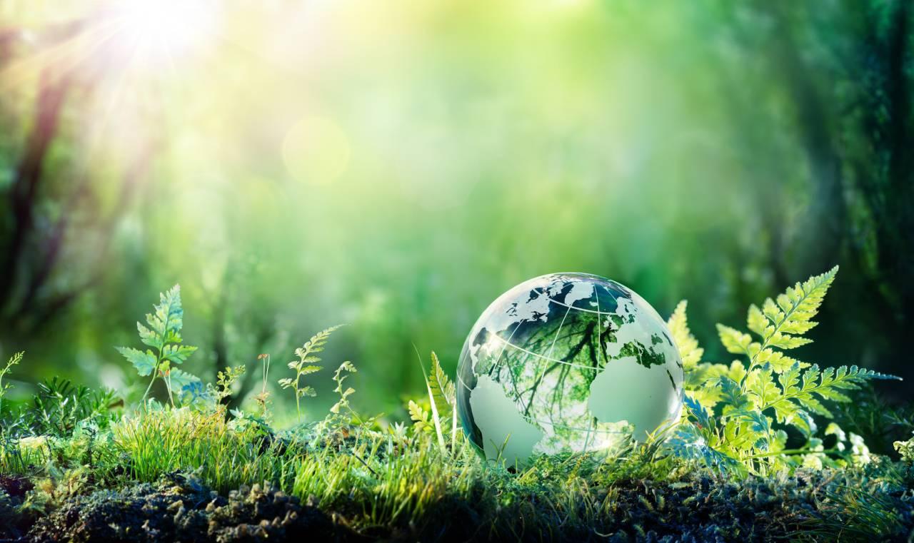Globe On Moss In Forest - Environment Concept - redução de carbono