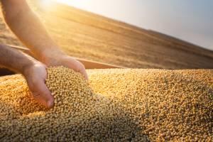 Produção de soja, commodities, agricultura