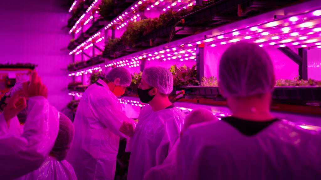 Produção da Pink Farms (Dan Magatti/Divulgação)